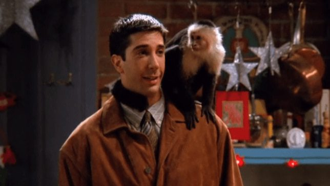 Ross David Schwimmer hated Marcel the monkey on Friends - Television News